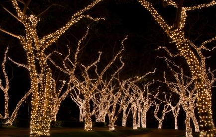 How to put christmas lights on palm tree branches tales of the how to put christmas lights on tall outdoor trees davey blog aloadofball Choice Image