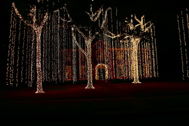 Outside Tree Lights | Solar Design